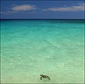Green sea turtle - White Sands Beach